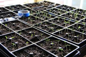 Spring Gardening Starts Indoors